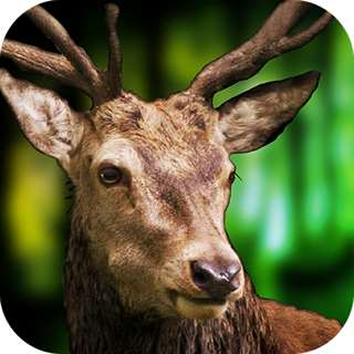 Hack Online 3D Deer Sniper Hunting Game 2017